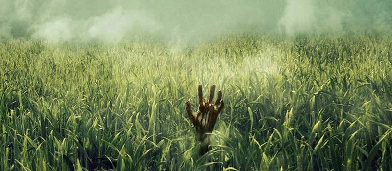 """recensione immagine di """"nell'erba alta"""" poster"""