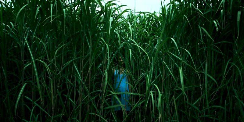 nell'erba alta netflix film